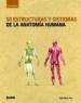 GUIA BREVE. 50 ESTRUCTURAS Y SISTEMAS DE LA ANATOMIA HUMANA GABRIELLE M. FINN