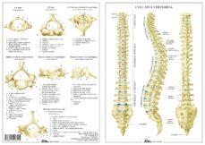 columna vertebral-miguel jimenez hernandez-9788494518515